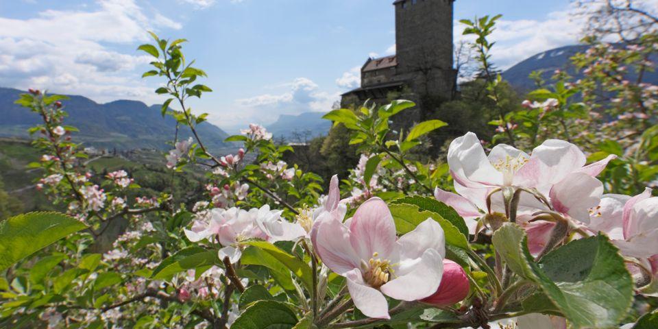 Die erste Frühlingsblüte – 4 Tage genießen, 3 bezahlen