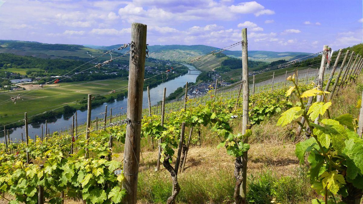 Wein- & Schlemmertage an der Mosel  | 3 Nächte