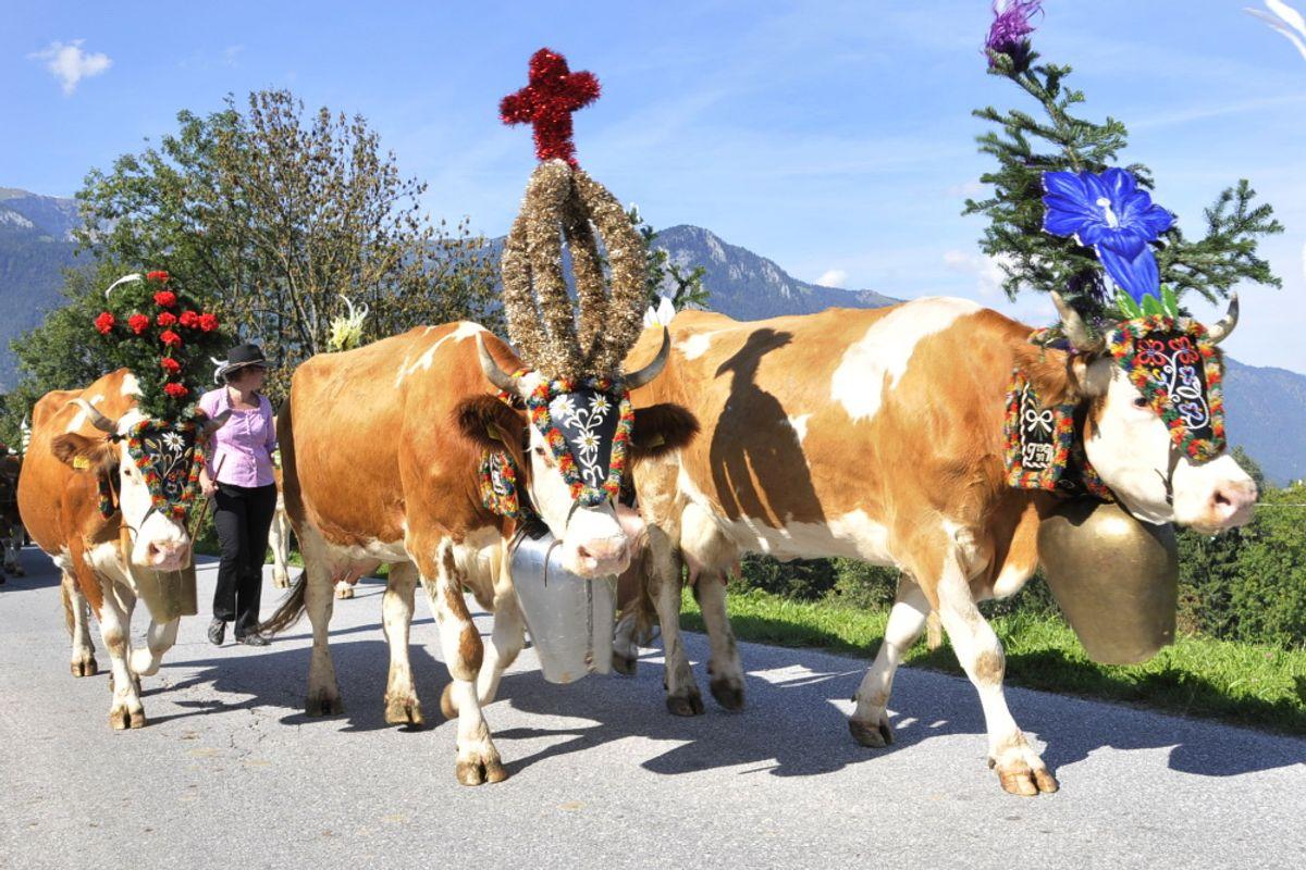 Almfest Tage im Alpbachtal