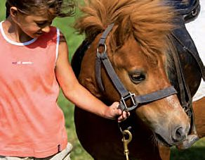 Small riding package - Happiness on a horse