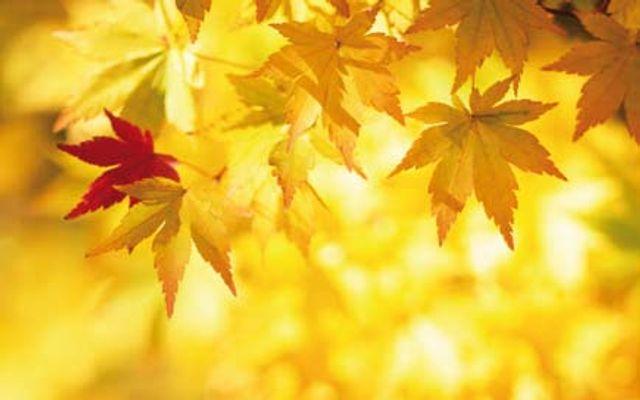 Goldener Herbst in Tirol - 7 Nächte