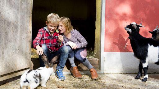 Kinder haben tierischen Spaß im Streichelzoo.