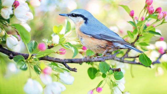 Frühling in Kärnten- Kinder frei