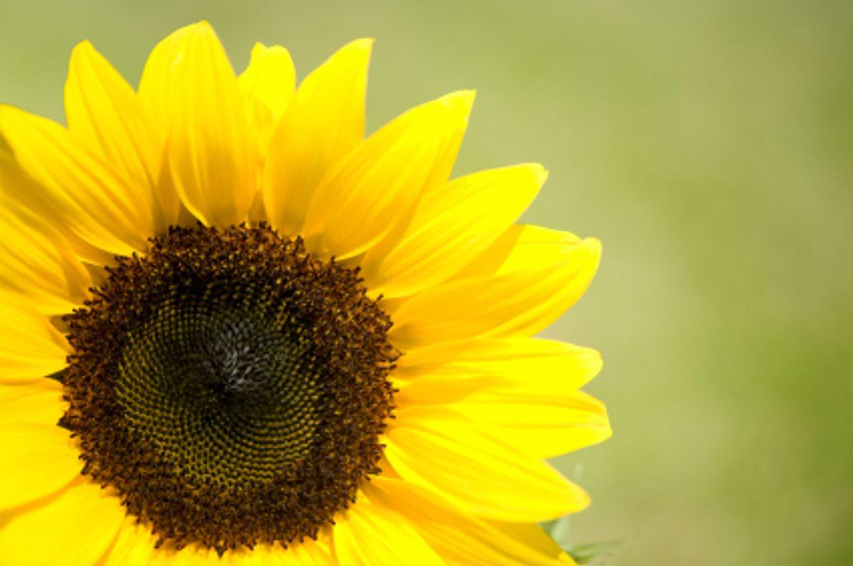 Sonnen-Pauschale ein Urlaub mit Preisvorteil und Mehrwert! |I