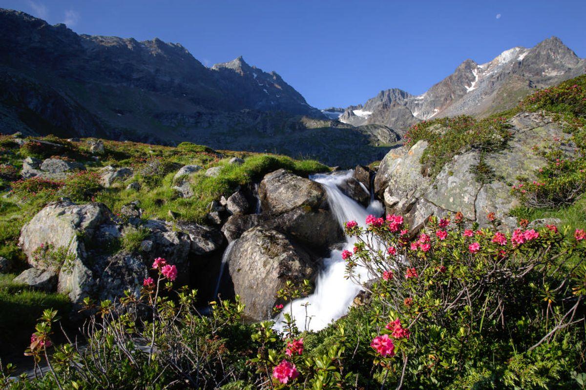 Alpenrosenglüh'n | 5 Nächte
