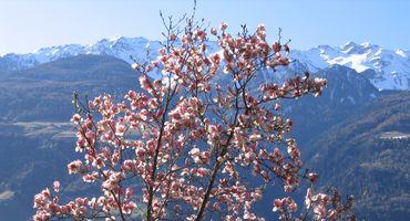 The Mediterranean spring in Hotel Preidlhof