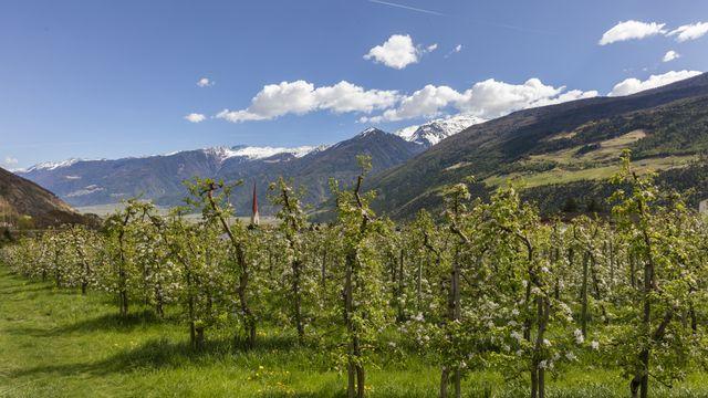 Spring hiking week in South Tyrol