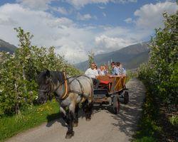 BIO HOTEL Anna: Kutschenfahrt - Landhotel Anna & Reiterhof Vill, Schlanders, Vinschgau, Trentino-Südtirol, Italien