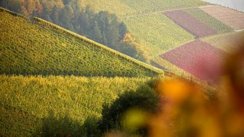 Ackerfelder in der grünen Landschaft