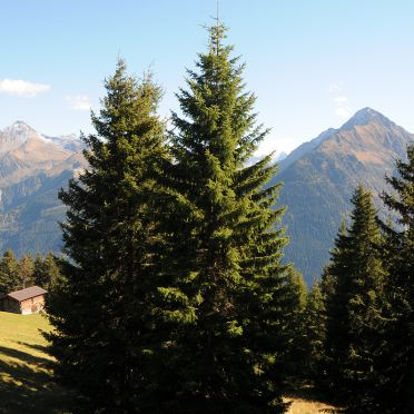 Aussicht, Brandstatt Alm, Finkenberg, Tirol, Tirol, Österreich