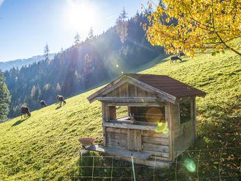 Ahornhütte - Steiermark - Österreich