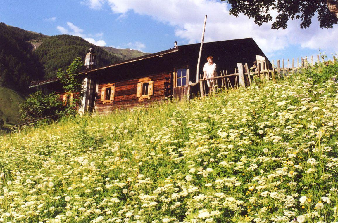 Hungarhub Hütte, Frontansicht