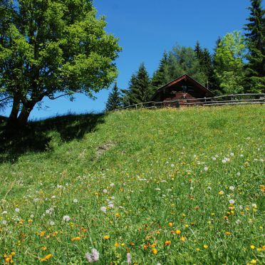 Summer, Karblickhütte, Bucheben, Salzburg, Salzburg, Austria