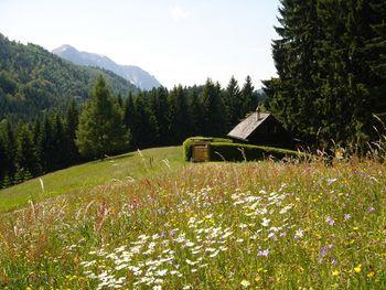 Jagastube - Oberösterreich - Österreich