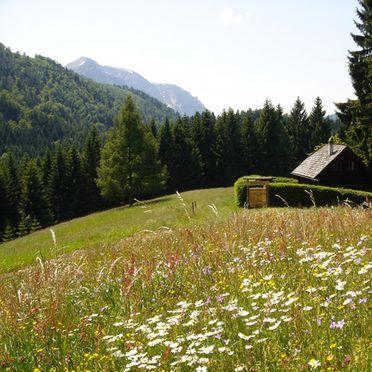 Sommer Aussicht, Jagastube, Neukirchen, Oberösterreich, Oberösterreich, Österreich