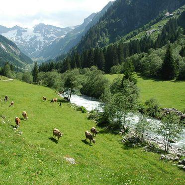 Umgebung, Ferienhaus Stillupp, Mayrhofen, Tirol, Tirol, Österreich