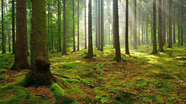 Waldatmen