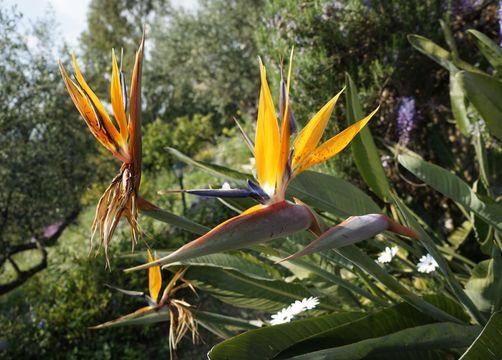 Biohotel Mani Sonnenlink: Garten - Mani Sonnenlink, Pyrgos-West Mani, Griechenland