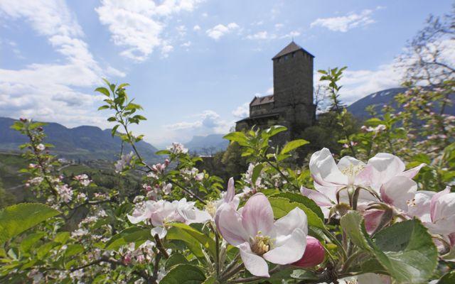 "Frühlings-Special ""Entspannt zur Apfelblüte"""