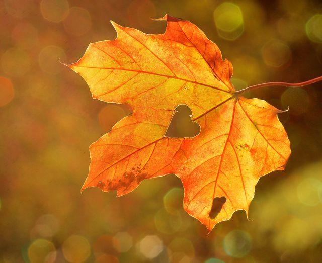 Early Bird: Herbstzauber -25%
