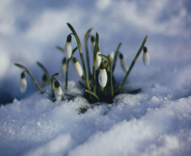 Step by Step through Spring