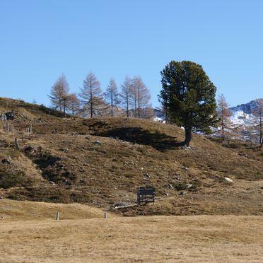 Almwiesenhütte, Almlandschaft