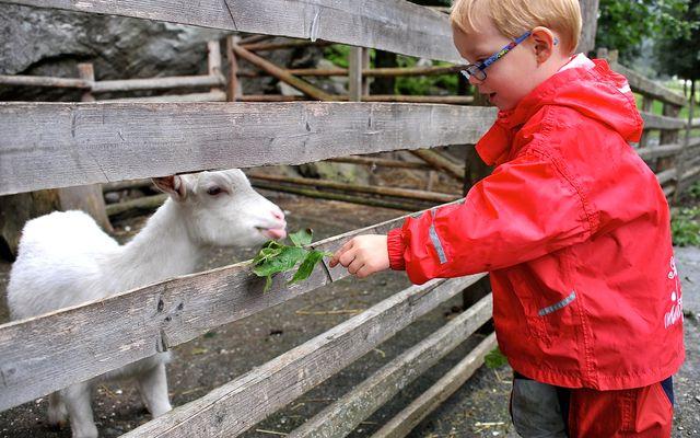 Bio-Kinderhotel Benjamin: Urlaub mit Tieren