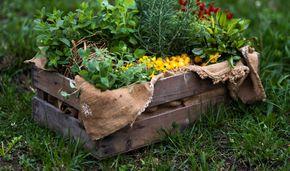 herbs days