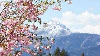 Südtirol Balance Wochen