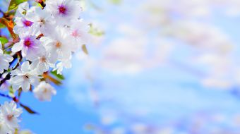 Frühlingstage   | 7 ÜN
