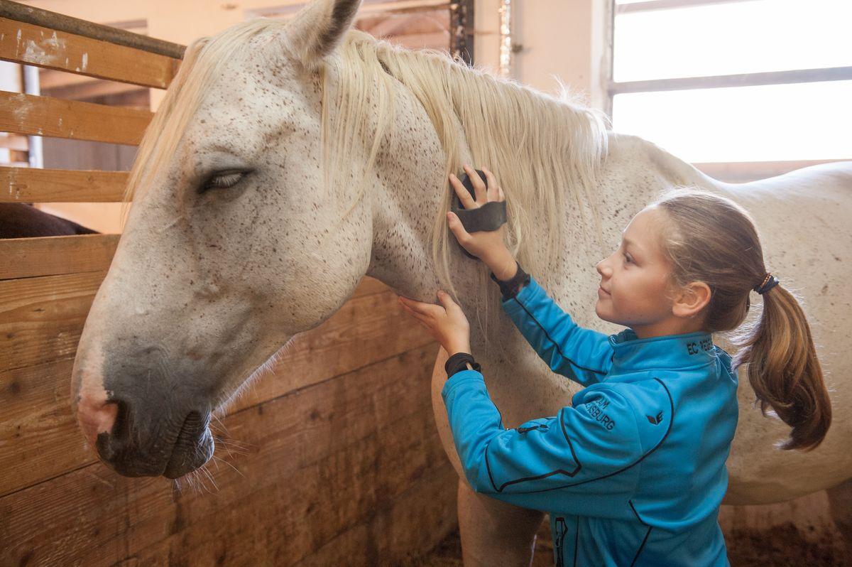 Natural Horsemanship - buchbar ab 12 Jahren -