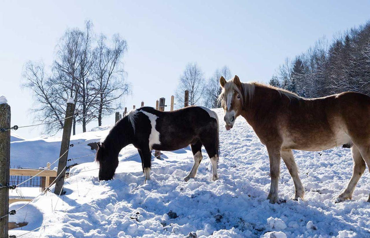 GS_Pferde.jpg
