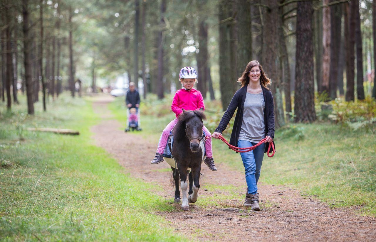 Pony im Wald.jpg