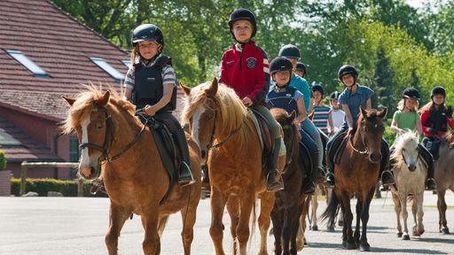 Wenn Sie Pferde lieben, sind Sie im Familotel Gut Landegge genau richtig.