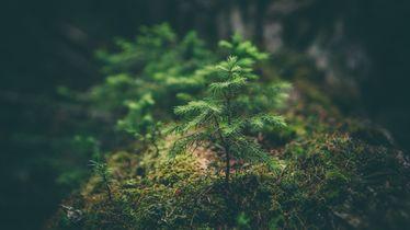 Walderlebniswochen