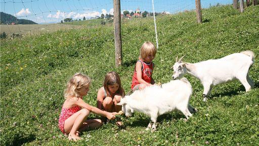 Unsere Tiere wie unsere Pferde, Schafe und Hasen oder unser Dammwild sind jeden Tag zum greifen nah für Sie und Ihre Kinder.