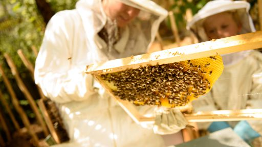 Biohotel Bavaria Bienenwanderung Garmisch Partenkirchen