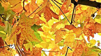 >> Golden Days <<