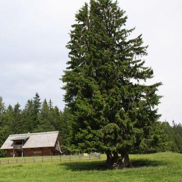 Gregor Peter Hütte, Sommer