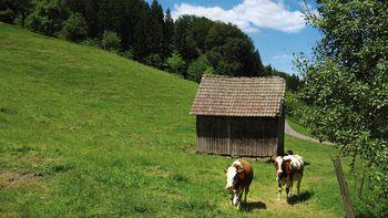 Schwarzwald Schnupperpaket