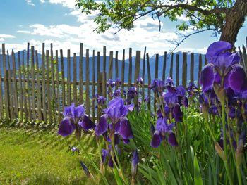 Kohlstatt Hütte - Trentino-Südtirol - Italien