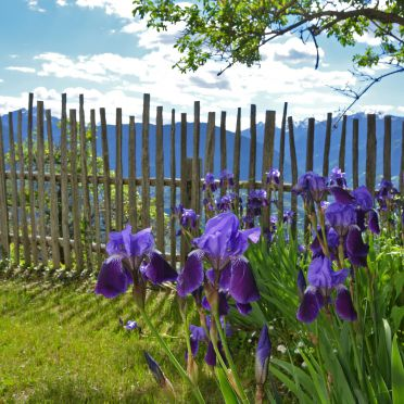 Sommer, Kohlstatt Hütte, Vöran, Trentino-Südtirol, Trentino-Südtirol, Italien