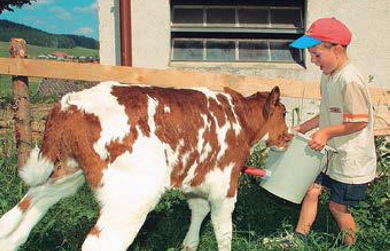 Öko-Bauernhof mit Schweinen, Rindern und Ziegen