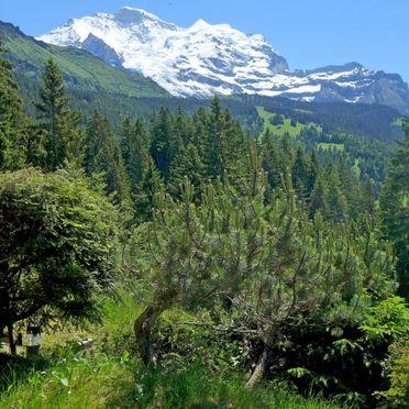 Innen Sommer 5, Chalet Zwärgli, Wengen, Berner Oberland, Bern, Schweiz
